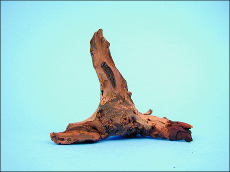 Kořen Mopani 12 - 25 cm 1ks