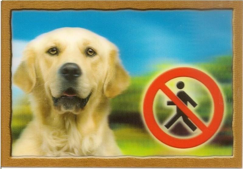 Cedulka 3D Pozor pes Zlatý retrivr