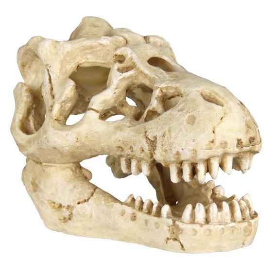 Sada 6 ks zvířecích lebek 8 - 11 cm